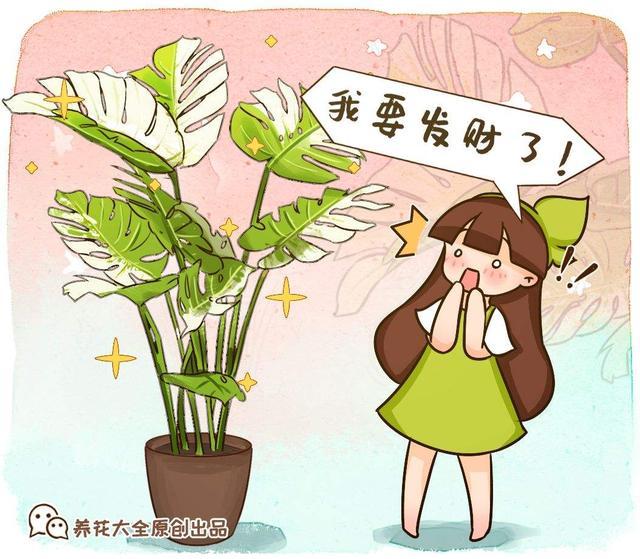 5莳花叶子美得像油画,摆在家里像艺术品,但价格贵到难以接管 第6张图片