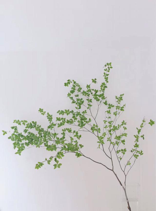 5种小众花,家里养一盆,屋里立马气量变高级 第3张图片