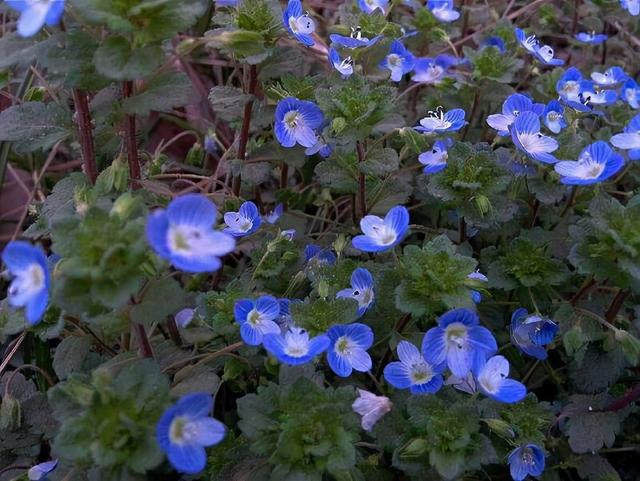 5种小众花,家里养一盆,屋里立马气量变高级 第6张图片