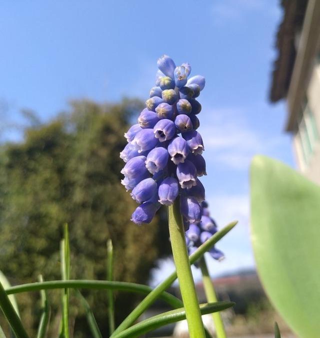 秋冬季缺不了的9莳花,南北方都能养,现在预备不算迟 第2张图片