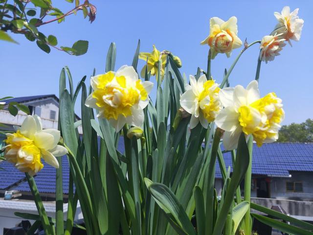 秋冬季缺不了的9莳花,南北方都能养,现在预备不算迟 第4张图片