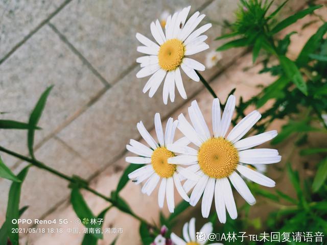 秋冬季缺不了的9莳花,南北方都能养,现在预备不算迟 第10张图片