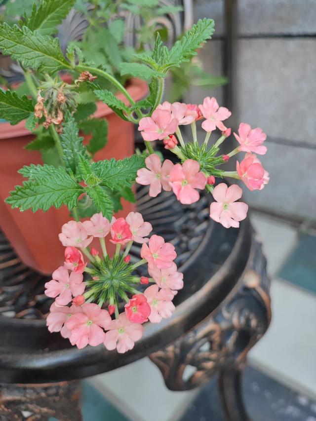 秋冬季缺不了的9莳花,南北方都能养,现在预备不算迟 第11张图片