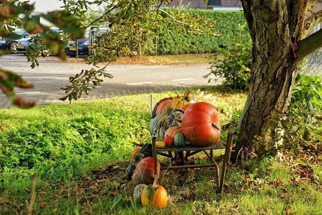 荷兰人的本质真好,在乡下无人售货摊,相信天主有眼,在看着 第6张图片