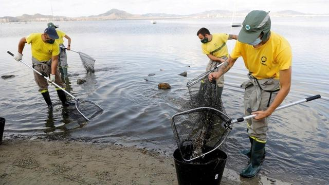 """西班牙马尔梅诺潟湖受养猪业严重净化出现大量死鱼,有人竟怪""""中国人爱吃猪肉"""" 第2张图片"""