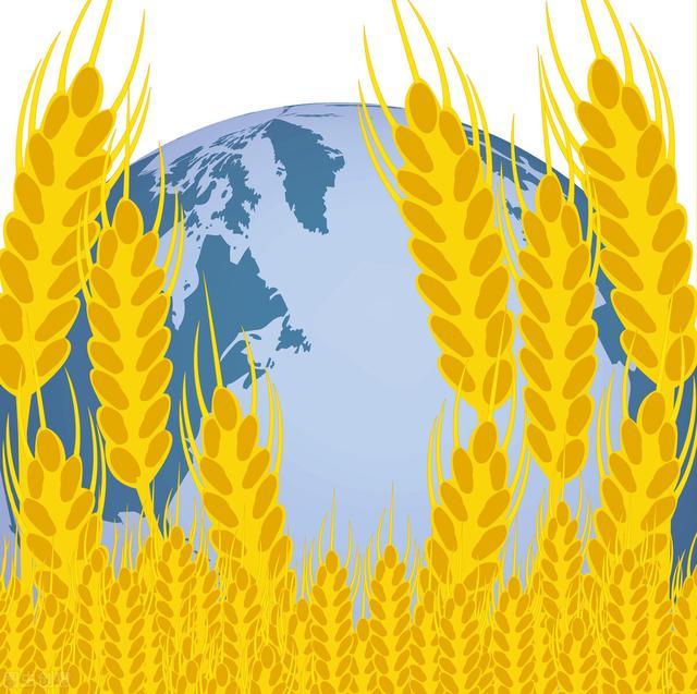 10月21日国际粮价:首个转基因小麦开始种植,印度限制化肥涨价